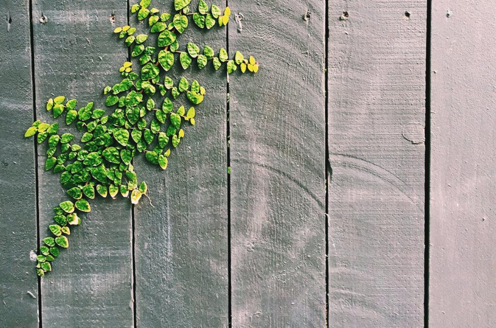 panel ogrodzeniowy z roślinką