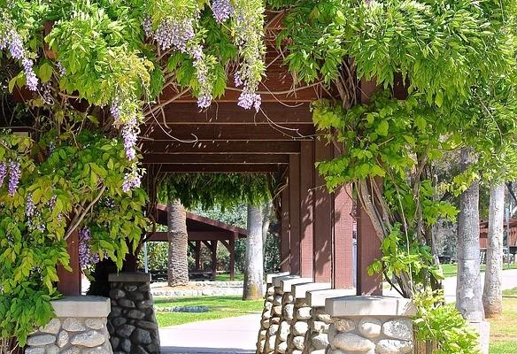 Dbamy o ogród - jakie rośliny będą najlepsze?