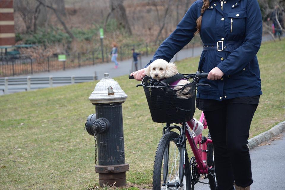 koszyk na rower